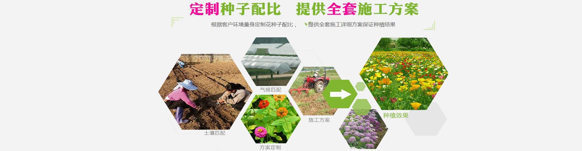 花草种子定制